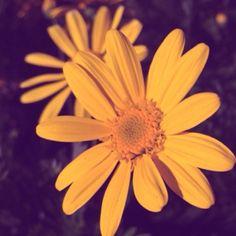 Little flower<3