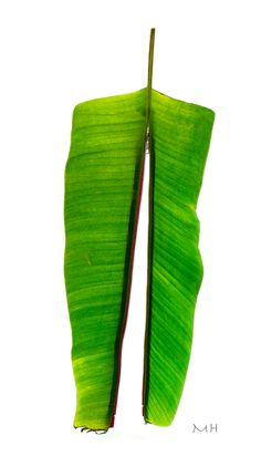 Green Art Green Art, Ikebana, Cactus Plants, Flora, Cacti, Cactus, Plants