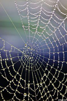 ✮ Eye on the web