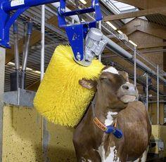 Scrubbing for Wagyu