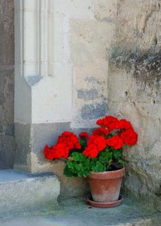 Fabulously French: Some fabulously french flowers for you......