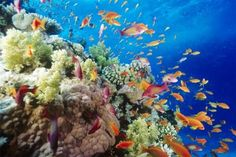 The Great Barrier Reef - Queensland
