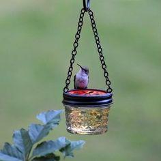 57 Best hummingbirds images | Garden, How to attract birds