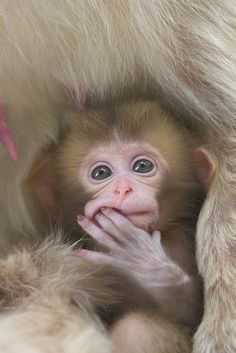 A cute baby look