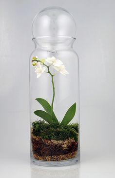 terrarium - Where can I get a container like this?orchid terrarium - Where can I get a container like this? Terrarium Jar, Orchid Terrarium, Terrarium Plants, Succulent Terrarium, Jar Design, Design Ideas, Decoration Plante, Deco Floral, Terraria