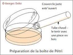 """Résultat de recherche d'images pour """"boite de petri"""""""