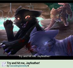 Try and hit me, Jayfeather by cascadingserenity on deviantart