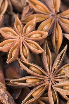 Star anise: Becouse of its shape, the star anise was sacred to the Goddess and therefore a potent fertility symbol.