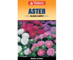 Yates Colour Carpet Aster