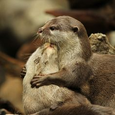 Could people be as nice to each other as otters are?  Just for one day?