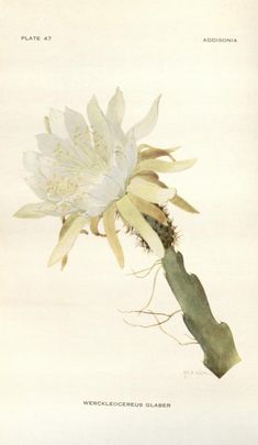 Addisonia;colored illustrations and popular descriptions of plants. (Volume v. 2 1917) - New York Botanical Garden