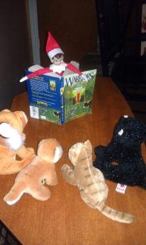 Reading Warrior Cats to a friendly crowd of stuffed animals