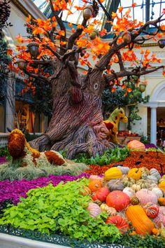 Fall colors are so pretty!