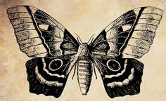 butterfly insect png file digi stamp clip by VellasCollageSheets, $1.50