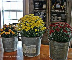 Vintage galvanized buckets full of Fall Flowers, Mums n more Farmhouse Style Goodness