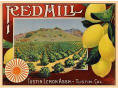 Tustin Rover Collie Dog Orange Citrus Fruit Crate Box Label Vintage Art Print