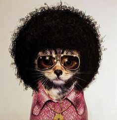 Pets as Famous People (32 Photos) | FunCage