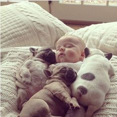 A baby and three french bulldog puppies. What could be cuter?!