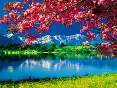 Awesome Nature Desktop HD Wallpapers | Wallbervation