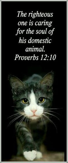 """Proverbs via denise izzo / Upon going to my New American Bible, Saint Joseph Edition, Proverbs reads: """"The just man takes care of his beast, but the heart of the wicked is merciless."""" -- Something to think about. Cat Quotes, Animal Quotes, Cat Sayings, Crazy Cat Lady, Crazy Cats, I Love Cats, Cute Cats, Proverbs 12 10, Animals And Pets"""