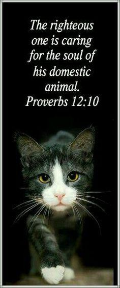 Proverbs 12:10.