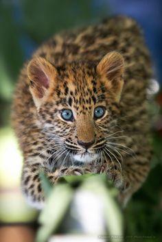 magicalnaturetour:  Photographer Akishin Vyacheslav ~ Predator  ~ A cute predator :)