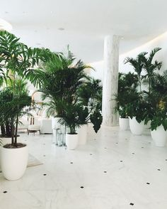 Photos: Ian Schragers Miami Beach Edition, Where the Cool Kids Hang - Condé Nast Traveler Green Plants, Tropical Plants, Indoor Garden, Indoor Plants, House Of Decor, Ian Schrager, Miami Beach Edition, Edition Hotel, Hotel Lobby Design