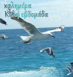 WEEK Καλημέρα Καλή Εβδομάδα - Good morning Have a nice week Greek Language, Beautiful Images, Good Morning, Funny, Animals, Gardening, Photos, Buen Dia, Animales