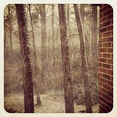 snowstorm in Richmond VA
