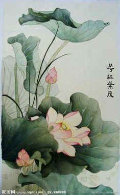 Korean Painting, Japanese Painting, Chinese Painting, Lotus Painting, Silk Painting, Watercolor Flowers, Watercolor Art, Ohara Koson, Lotus Art
