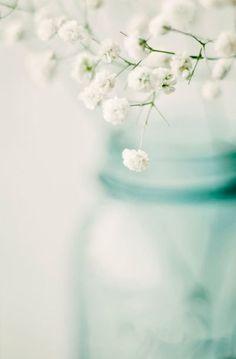 Breathless - fine art photography, baby's breath, spring home decor, mason jar