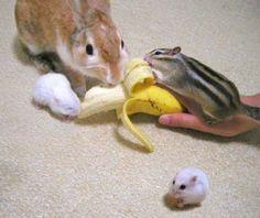Banana Attack