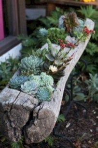 Cactus planter for indoor garden ideas 26