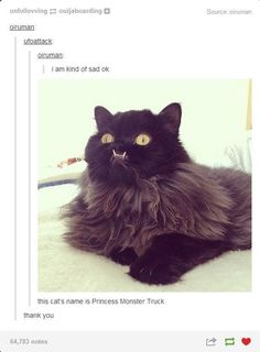 That honestly looks exactly like my cat