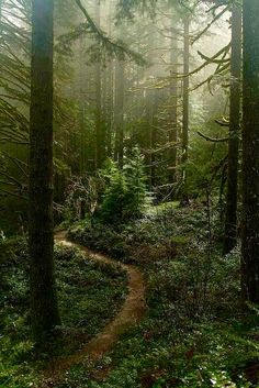 "Earth It was in the forest that I found ""the peace that passeth all understanding."" ~ Jane Goodall - Misty forest at Silver falls area, Oregon Misty Forest, Dark Forest, Forest Path, Forest Trail, Conifer Forest, Wild Forest, Forest At Night, Forest Scenery, Evergreen Forest"