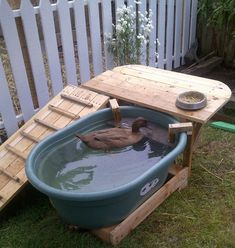 Ramp and deck built around a plastic water trough. All wood is reclaimed from shipping palettes sourced for free. Plastic spigot added to trough, and a ledge dropped. Backyard Ducks, Backyard Farming, Chickens Backyard, Backyard Toys, Raising Ducks, Raising Chickens, Canard Coop, Duck Pens, Duck Duck