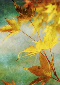 Seasons | Fall by annabelle