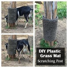DIY Plastic Grass Mat Scratching Post Hey it's natural, even us human beings need to scratch the itch every now and again. In a previous post I shared this diy gosat scratching post. Zoo Animals, Animals And Pets, Goat Playground, Playground Ideas, Pallet Playground, Tier Zoo, Goat Shelter, Goat Pen, Goat Care