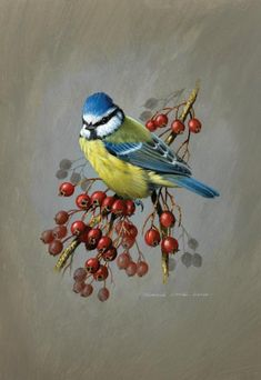 Painting by Terance James Bond. Pretty Birds, Beautiful Birds, Fabric Painting, Painting & Drawing, Thread Painting, Vogel Illustration, Bird Drawings, Bird Pictures, Vintage Birds
