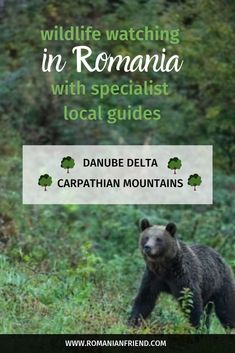 Book tours online in Romania from the best network of local guides and partners! 100 tours and experiences all over the country Danube Delta, European Road Trip, Visit Romania, Romania Travel, Travel Through Europe, Carpathian Mountains, Hiking Tours, Senior Trip, Photography Tours