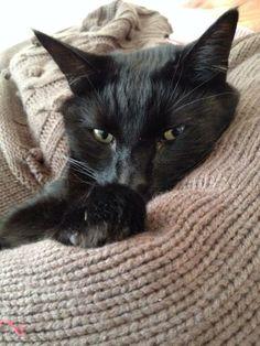 Cuddle kitty ~ awwww ♥
