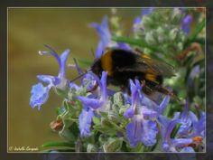 Printemps en Provence... http://mistoulinetmistouline.eklablog.com http://www.my-art.com/isabelle-escapade/collections/provence