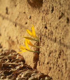 Cette plante a poussé et fleuri dans la fissure d'un mur