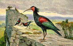 Waldrapp by Heinrich Harder (1858-1935)