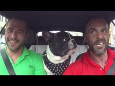 He Put A Camera In The Car, But When The Dog Does THIS? I Can't Believe It! - LittleThings.com - Amazing Videos, Stories and News from around the world. It's the little things in life that matter the most! - LittleThings.com