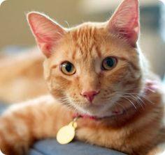 Los gatos reconocen tu voz <3