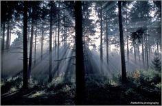 4. Strijklicht