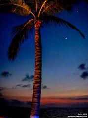 La Luna y La Palmera (Juanfraplanet) Tags: moon mexico puerto jalisco luna vallarta