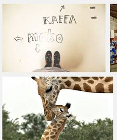 "I thought this was a cool coincidence in my ""giraffe"" google search."
