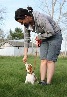 Toutes les services pour votre chien: Dressage, obéissance. / Pension / Toilettage / Parc canin / Nourriture / Accessoires